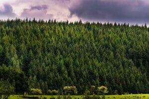 Pennine Harvest Bowland Forest